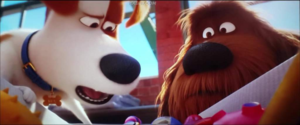 Movie The Secret Life Of Pets 2 2019 Hd Tc Netnaija