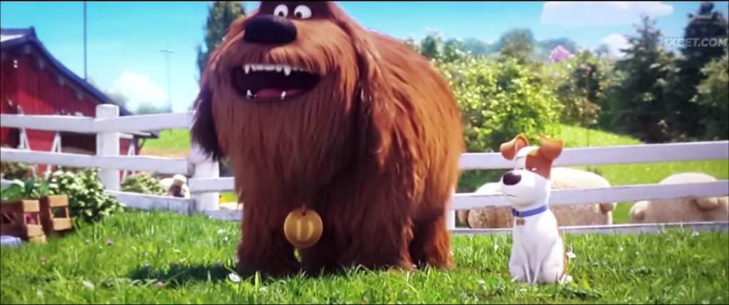 The Secret Life of Pets 2 (2019) HC-TC 8
