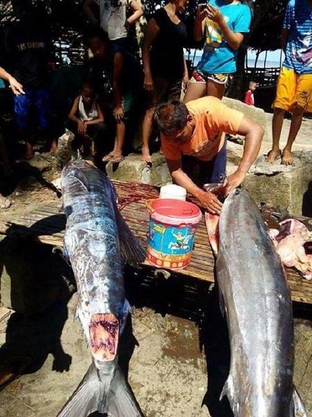 Tattooed Fish Philippines3