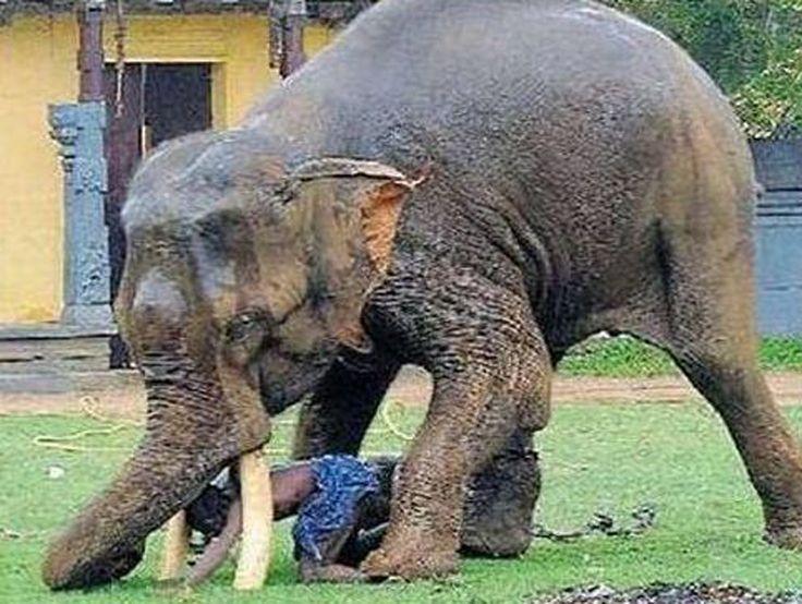 Elephant Tramples Man In Nepal