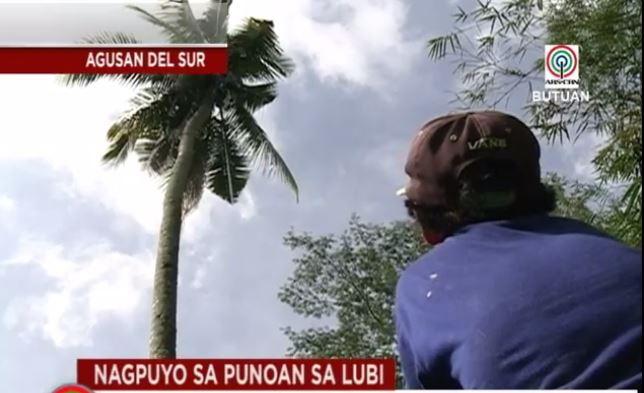 Gilbert Sanchez Coconut Tree1