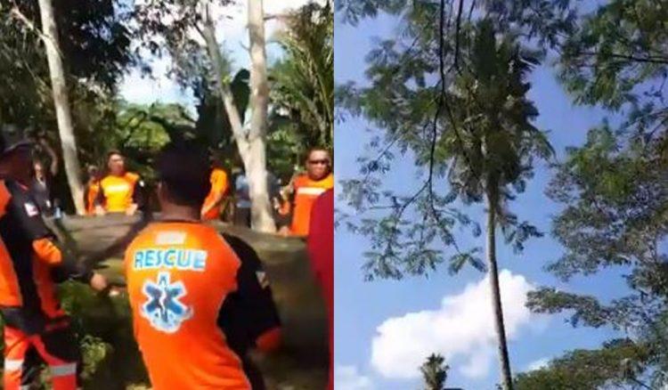 Gilbert Sanchez Coconut Tree2