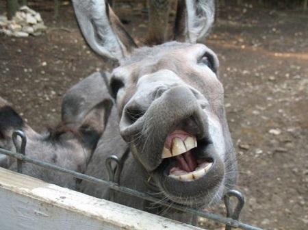 Donkey%20cries