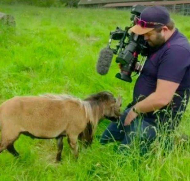 Shocking moment a 'rare sheep' smacked the private part of a BBC cameraman