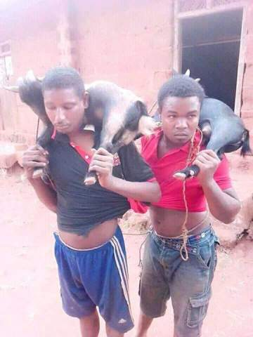 Young Men Caught Stealing Goats In Nsukka. See What Was Done To Them (Photos)