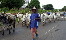 Tension As Over 200 Herdsmen With Families, Cattle Arrive In Enugu Community