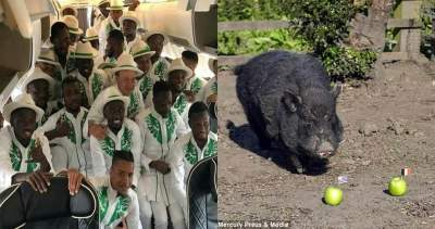 Russia 2018: Psychic pig who predicted Trump's victory picks Nigeria, Argentina for semi-final