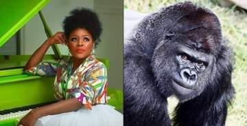 """""""This Country Is Useless"""" -Singer Omawumi Reacts To Gorilla Swallowing N6.8m In Kano Zoo"""