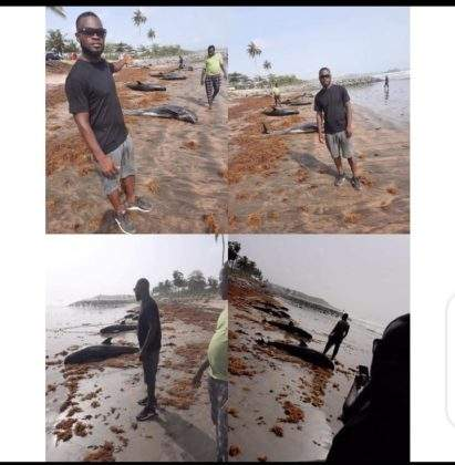 Many Dolphins were washed ashore at Brawire beach in Ghana (Photos)