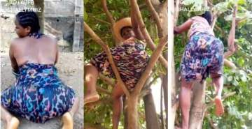 Slay Queen Climbs Tree To Dance To Davido's New Song (Video)