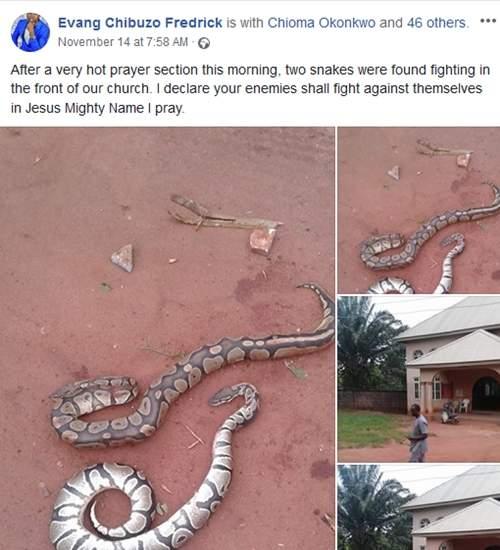 Big Snake Killed 2