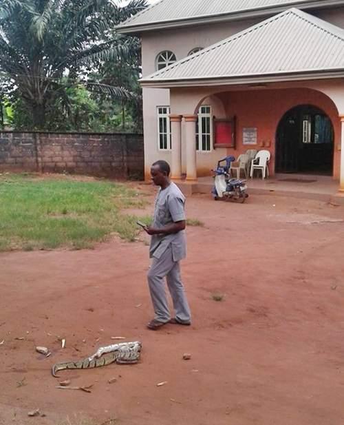Big Snake Killed 3