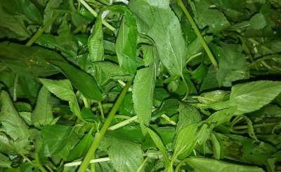 6 Health Benefits Of Jute Leaf (Ewedu)
