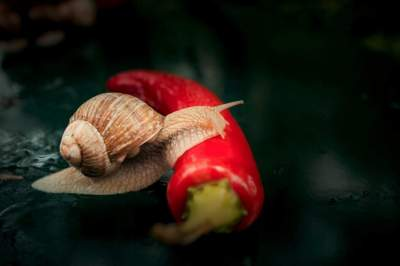 5 Amazing Reasons You Should Be Eating Snail