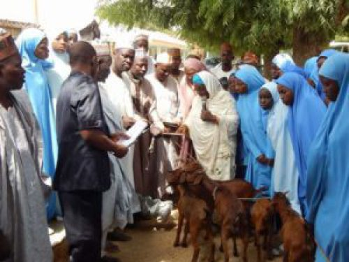 The commissioner of Education Professor Halima Idris (in white veil) distributing the goats on behalf of the state governor, Aminu Masari, at GGASS Dutsinma on Saturday, November 11, 2017. (Katsina Post Hausa)