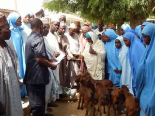 The commissioner of Education Professor Halima Idris (in white veil) distributing the goats on behalf of the state governor, Aminu Masari, at GGASS Dutsinma on Saturday, November 11, 2017. (Katsina Post Hausa)