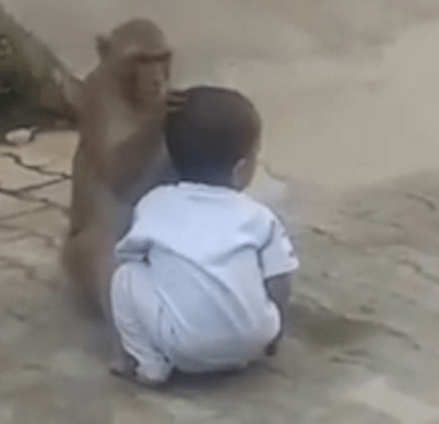 Monkey Kidnaps Boy
