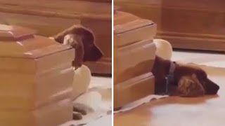 Tear-jerking Moment Loyal Dog Sits By His Owner's Coffin At Tragic Mass FuneralOf Italy Earthquake Victims